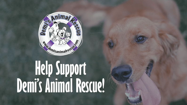 Featured Organization: Demi's Animal Rescue